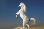 К чему снится лошадь.