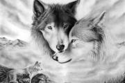 К чему снятся волки.