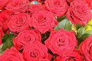 К чему снятся розы.