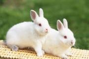 К чему снятся кролики.