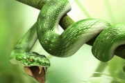 К чему снятся змеи.