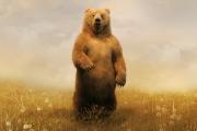 К чему снится медведь.