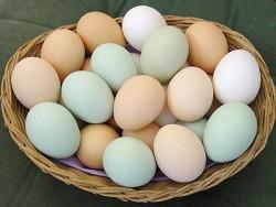 К чему снятся яйца. Яйца в вашем сне. Узнайте к чему снятся яйца по сонникам Миллера, Ванги, Фрейда и другим.