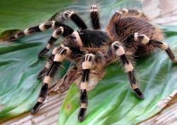 К чему снятся пауки. Пауки в вашем сне. Узнайте к чему снятся пауки по сонникам Миллера, Ванги, Фрейда и другим.