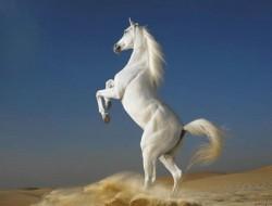 К чему снится лошадь. Лошадь в вашем сне. Узнайте к чему снится лошадь по сонникам Миллера, Ванги, Фрейда и другим.