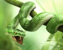 К чему снятся змеи. Змеи в вашем сне. Узнайте к чему снятся змеи по сонникам Миллера, Ванги, Фрейда и другим.