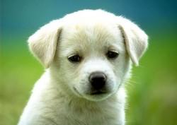 К чему снится собака. Собака в вашем сне. Узнайте к чему снится собака по сонникам Миллера, Ванги, Фрейда и другим.