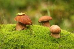 К чему снятся грибы. Грибы в вашем сне. Узнайте к чему снятся грибы по сонникам Миллера, Ванги, Фрейда и другим.