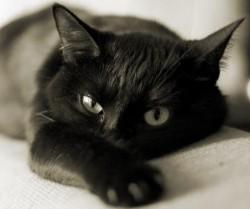 К чему снятся кошки. Кошки в вашем сне. Узнайте к чему снятся кошки по сонникам Миллера, Ванги, Фрейда и другим.