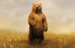 К чему снится медведь. Медведь в вашем сне. Узнайте к чему снится медведь по сонникам Миллера, Ванги, Фрейда и другим.