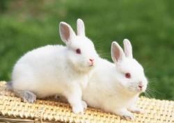 К чему снятся кролики. Кролики в вашем сне. Узнайте к чему снятся кролики по сонникам Миллера, Ванги, Фрейда и другим.